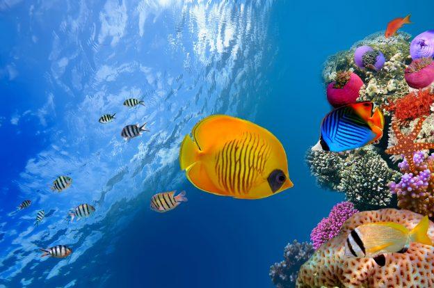 Most Expensive Aquarium Fish In The World