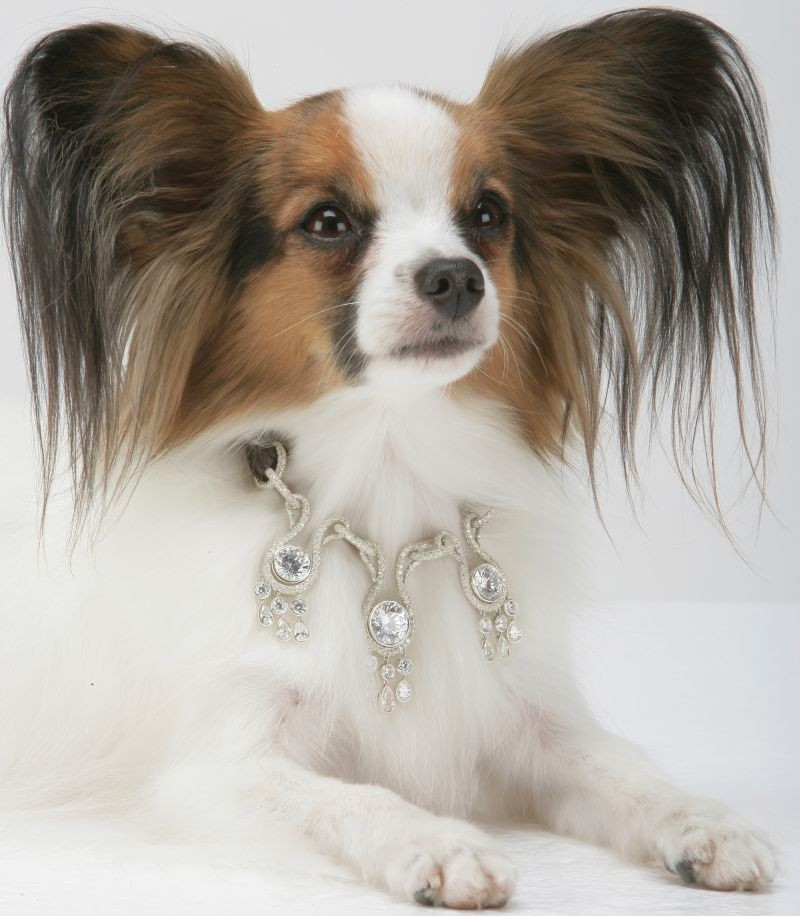 The Most Expensive Dog Collar in the World