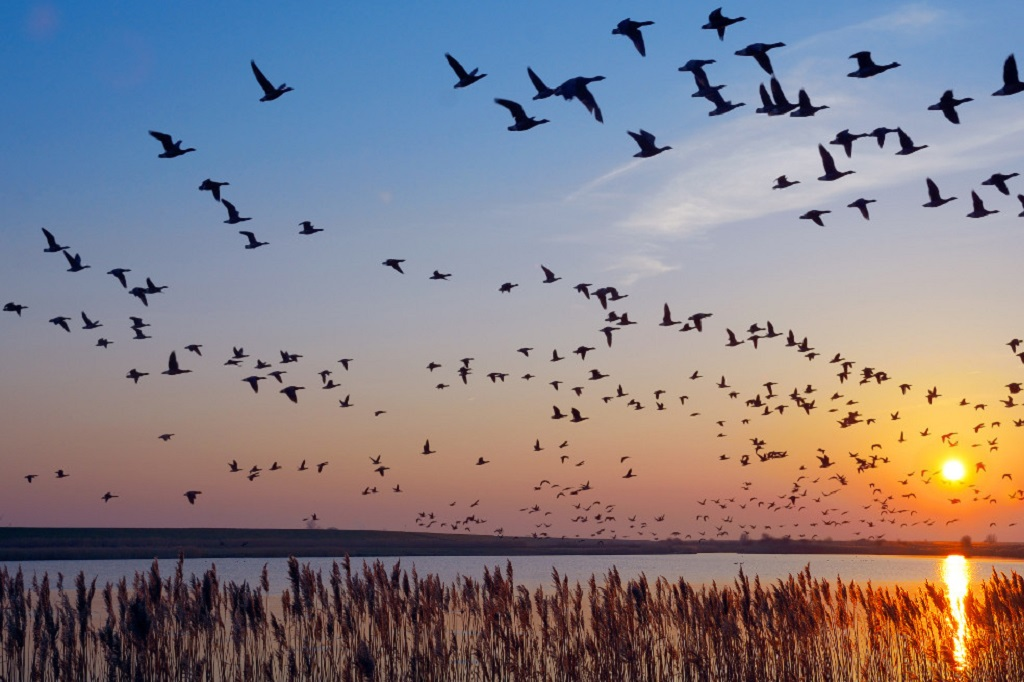 The Longest Bird Migration in the World