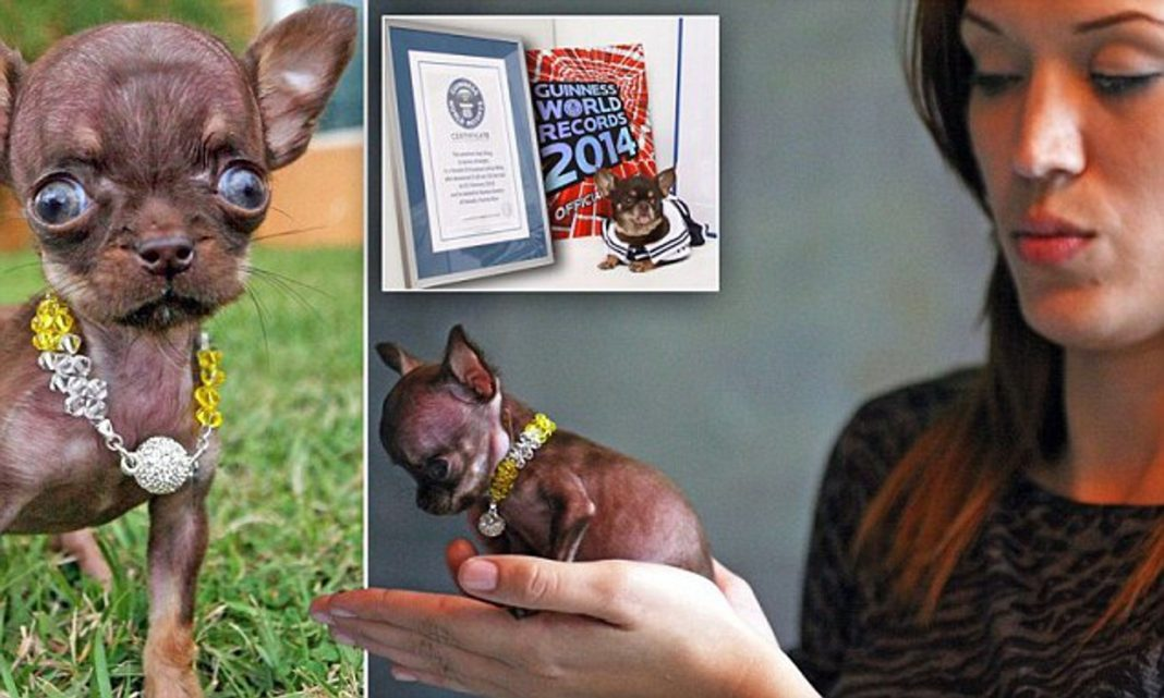 The Smallest Living Dog in the World
